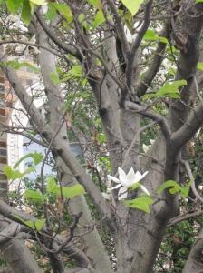 lone-flower